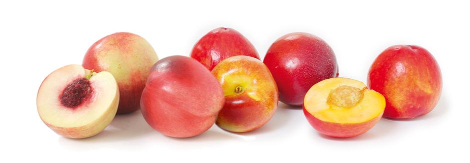 nectarines-fin